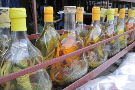 Online wild animal trading still out of control in Vietnam